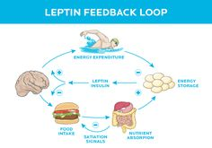 Eating too much? . [How brain signaling drives what you eat. And what to do about it.] http://www.precisionnutrition.com/eating-too-much-blame-your-brain