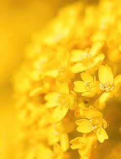 Bouquet yellow.   For similar pins please follow me at -https://www.pinterest.com/annelouise1959/colour-me-yellow/