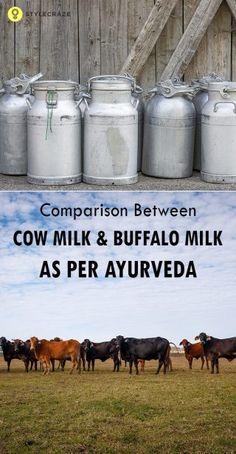Comparison Between Cow Milk And Buffalo Milk As Per Ayurveda
