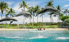Dolphins Hilton Waikoloa Village - Big Island - Hawaii