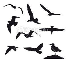 seagull tattoo - Google Search