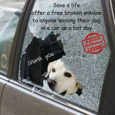 "Give Your Dog A ""Break"" On Hot Days! NO Dogs Left Behind In HOT Cars Ever!........................."