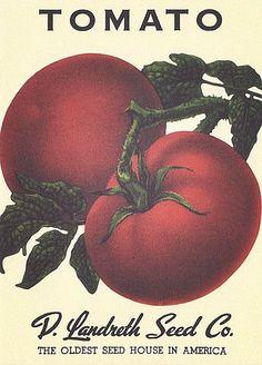 Heirloom Seed Packets   Heirloom Vegetable Seed Packet Note Cards