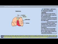 Lecția 28: Sistemul limfatic și imunitatea - YouTube Privacy Policy, The Creator, Youtube, Anatomy, Youtubers, Youtube Movies