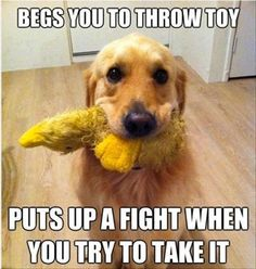 One of the Ten Commandments in the doggie world. Thou shalt not freely give up squeaky toy.