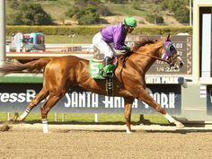 California Chrome, Kentucky Derby Winner, May 3rd 2014 @ 2 min, 3 sec. This was my bet b/c it was number 5