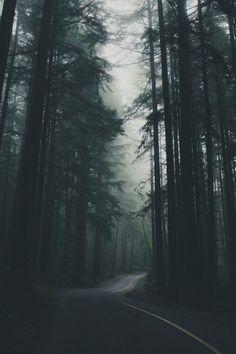 Redwoods #TraveltheGlobe #GlobeIn