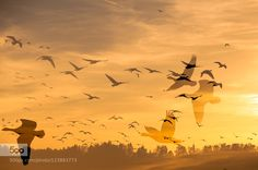 migration by graziellaserra #fadighanemmd