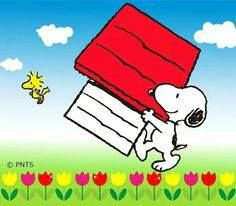 'Moving Day', for Snoopy & Woodstock. Charlie Brown Cafe, Charlie Brown Christmas, Charlie Brown And Snoopy, Snoopy Love, Snoopy And Woodstock, Peanuts Characters, Cartoon Characters, Happy Moving Day, Snoopy Images