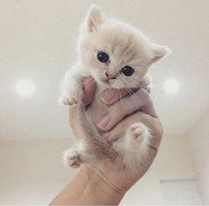 Handful of kitten cuteness
