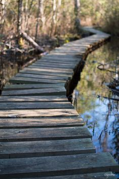 Neusiok Trail, Croatan National Forest near Havelock and New Bern, NC: The Lost…