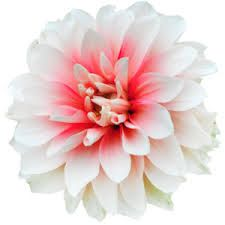 Image result for tumblr flowers png