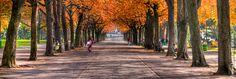 Le parc des Bastions à Genève en automne. Geneva, Portrait, Sidewalk, Country Roads, Places, Pictures, Exercise, Switzerland, Professional Photographer