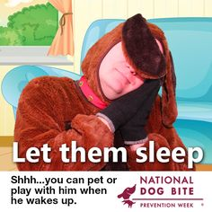 Let them sleep.you can pet or play with him when she/he wakes up. Dog Safety, Sleeping Dogs, Pet Health, Health And Safety, Animals For Kids, Fur Babies, Your Dog, Medical, Play