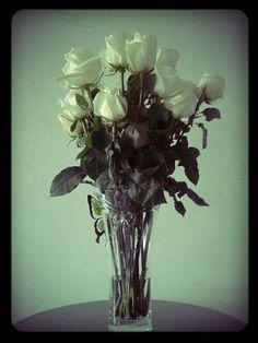 Flores rosas e