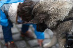 :) by Aziz Nasuti on Street Photography, Animals, Animales, Animaux, Animal, Animais