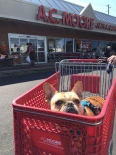 Shopping Day Ac Moore, Shopping Day, Plastic Laundry Basket, French Bulldog, Cute, Decor, Decoration, French Bulldog Shedding, Kawaii
