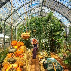 Pumpkins in the Greenhouse Greenhouse Restaurant, Picnic Style, Greenhouse Gardening, Garden Structures, Growing Plants, Pumpkins, Gardens, South Africa, Pumpkin