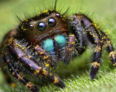 Примета: паук в доме, квартире, ванной, на кухне. К чему увидеть паука утром, вечером, днем, ночью, белого, красного, черного, желтого, зеленого, крестовика, мертвого, много пауков, убить паука намеренно или нечаянно: приметы