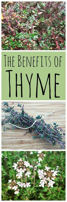 Thyme is an awesome herb to have around! Not only is it great for cooking, but it& also medicinal and good for the garden. Thyme is an awesome herb to have around! Not only is it great for cooking, but its also medicinal and good for the garden. Natural Herbs, Natural Healing, Natural Home Remedies, Herbal Remedies, Holistic Remedies, Natural Medicine, Herbal Medicine, Snoring Remedies, Healthy Herbs