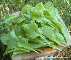 Grow and Eat Your Leafy Greens: A Series