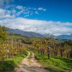 Taste Treviso: Italy's Prosecco province