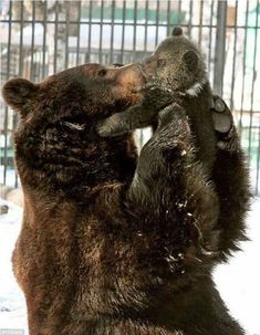 Bear mother with her cub .