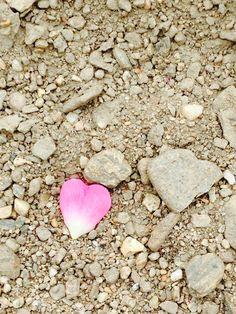 Heart rose petal