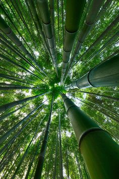 15 Truly Astounding Places To Visit In Japan - Travel Den Arashiyama Bamboo Forest, Japan - 15 Truly Astounding Places To Visit In Japan Nature Verte, Amitabha Buddha, Image Nature, Bamboo Garden, Bamboo Plants, Bamboo Tree, Tree Forest, Nature Wallpaper, Nature Pictures
