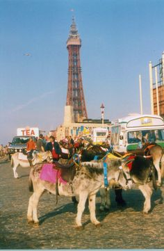 Donkeys at Blackpool. Photograph Roy A Higgins.