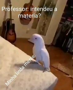 He's kinda chill tho . Funny Video Memes, Stupid Funny Memes, Wtf Funny, Videos Funny, Funny Animal Videos, Cute Funny Animals, Funny Parrots, Otaku Meme, Memes Status