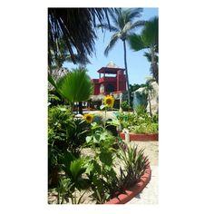 Jardín, Girasoles y Alberca  Villa Bahía Ancha Pie de La Cuesta Acapulco Gro.