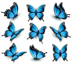 Vetor stock de Collection Colorful Butterflies Flying Different Directions (livre de direitos) 411631315 - ShutterstockSet Of Butterflies Graphics Set of beautiful blue butterflies.My works are fully editable, vector objects separated and by ecco- Mi Blue Butterfly Tattoo, Butterfly Drawing, Butterfly Tattoo Designs, Butterfly Painting, Butterfly Wallpaper, Monarch Butterfly, Butterfly Illustration, Mariposa Butterfly, Butterfly Design