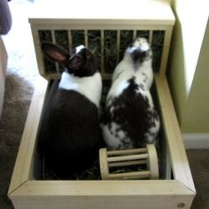 Fun ideas for rabbits! Rabbit Litter Box, Pet Rabbit, Pet Pigs, Guinea Pigs, Bunny Hutch, Bunny Bunny, Rabbit Information, Rabbit Names, Giant Rabbit