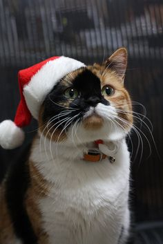 272 best christmas cats kittens images on pinterest christmas playing santa spiritdancerdesigns Images