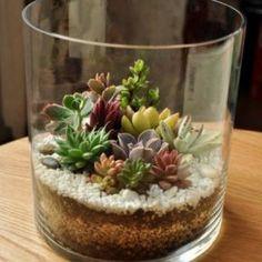 Si eres de las que dice: ¡Se me mueren hasta las plantas de plástico!. Pero sin embargo te gusta tenerlas en casa, sin duda los terrarium son para ti . Estos pequeños jardines en miniaturason fáci…