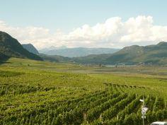 Tramin Winery: http://intothewine.org/2014/11/10/trentino-alto-adige-appunti-di-viaggio-tramin/