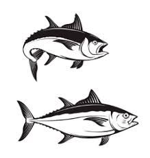 Image Result For Tuna Fish Drawing Fish Drawings Drawings Vector Art Illustration