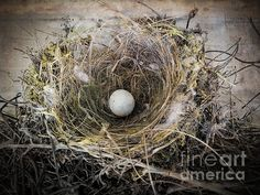 Title  Bird Nest - Occupied   Artist  Ella Kaye   Medium  Photograph - Photography - Digital Art