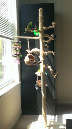 Easy and cheap DIY Play Gym/Stand - Talk Budgies Forums