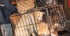 Terminar con la matanza de perros en China FIRMA Y COMPARTE ESTA PETICIÓN AHORA!