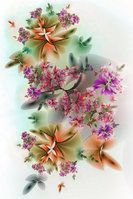 Flowers - the first 1 by segami
