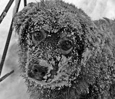 #dogs #winter #adorable