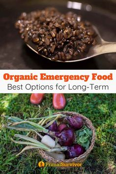 Here you will find the best brands of organic emergency food kits as well as options for DIY organic emergency meals for long-term prepping. #organic #emergencyfood #prepping #primalsurvivor Emergency Food Kits, Best Survival Food, Main Food Groups, Prepper Food, Instant Potatoes, Freeze Drying Food, Vegetable Protein, Backpacking Food, Dehydrated Food