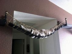 Giving a whole new meaning to 'hanging out'. We say bridge, this cat says hammock… | Community Post: 7 Amazing DIY Cat Dens… Are These Fur-Real?
