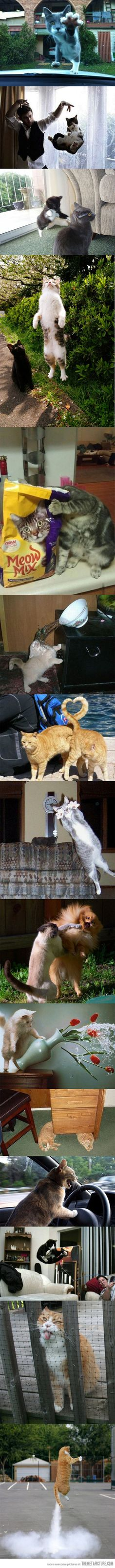 15 perfectly timed cat photos…