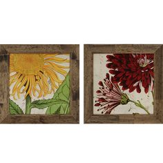 Paragon - Joyful Bloom Pk/2