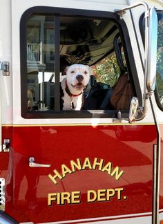 Jake, le chien victime des flammes devenu sapeur-pompier