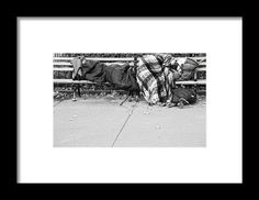 Homeless For The Night Framed Print By Alice Gipson