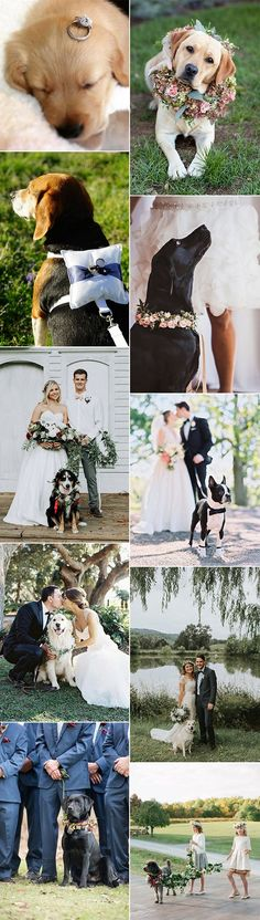 cute wedding photo ideas with dogs #dogs #weddingdogs #weddingphotos #weddingphotography #weddingideas #weddinginspiration